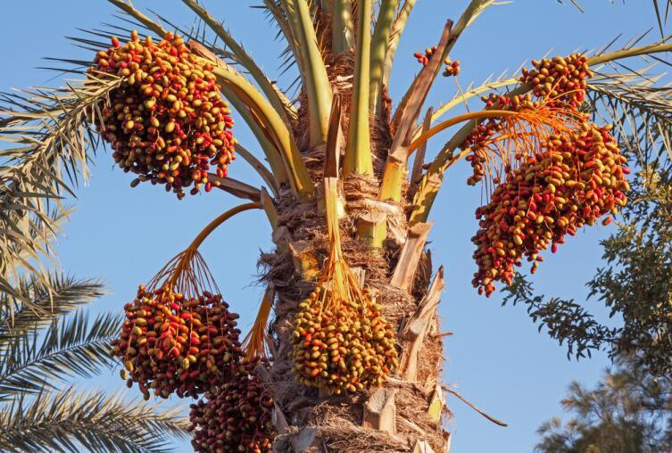 Отдых в Египте: ехать или не ехать? Флора, фауна, еда