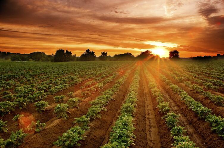 Какой картофель едят в Перу?