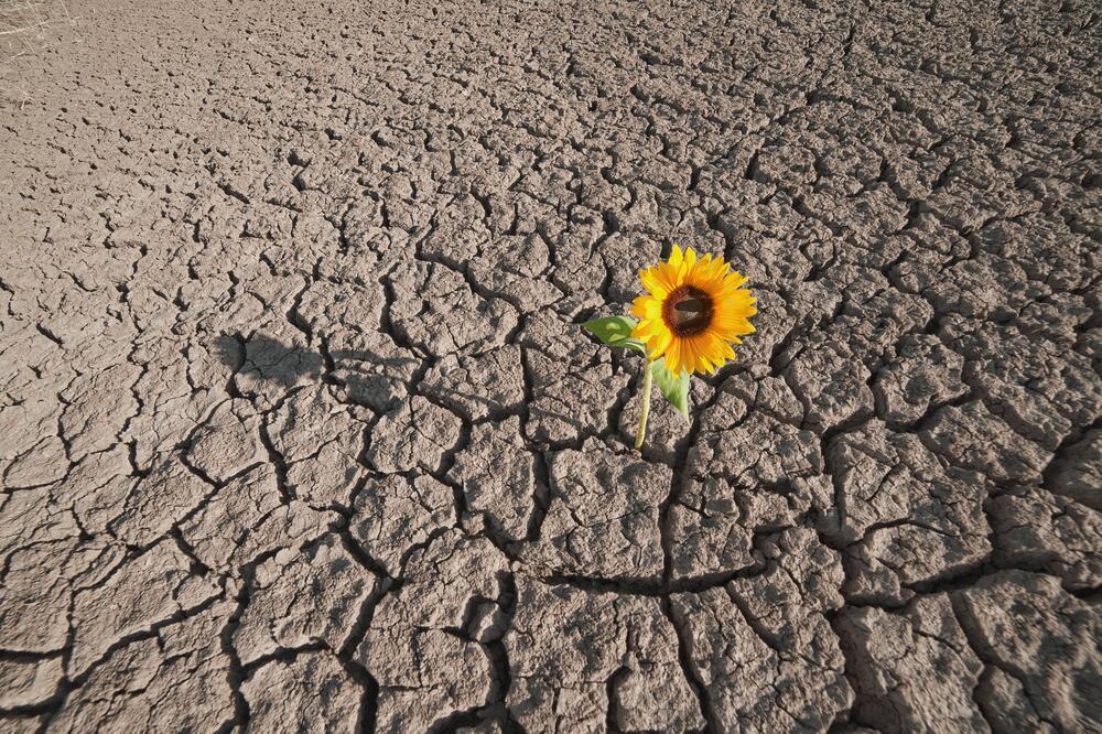 Глинистые почвы что сажать как 28