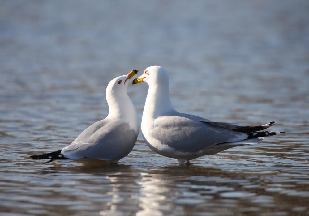 Буревестник - символ моря и непогоды. Чем он интересен?