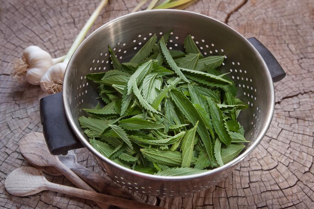 Что приготовить из крапивы?