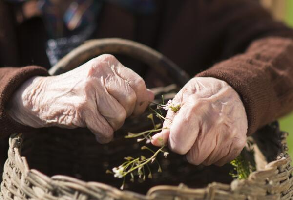 Старушка и огород: понимаем ли мы наших стариков?