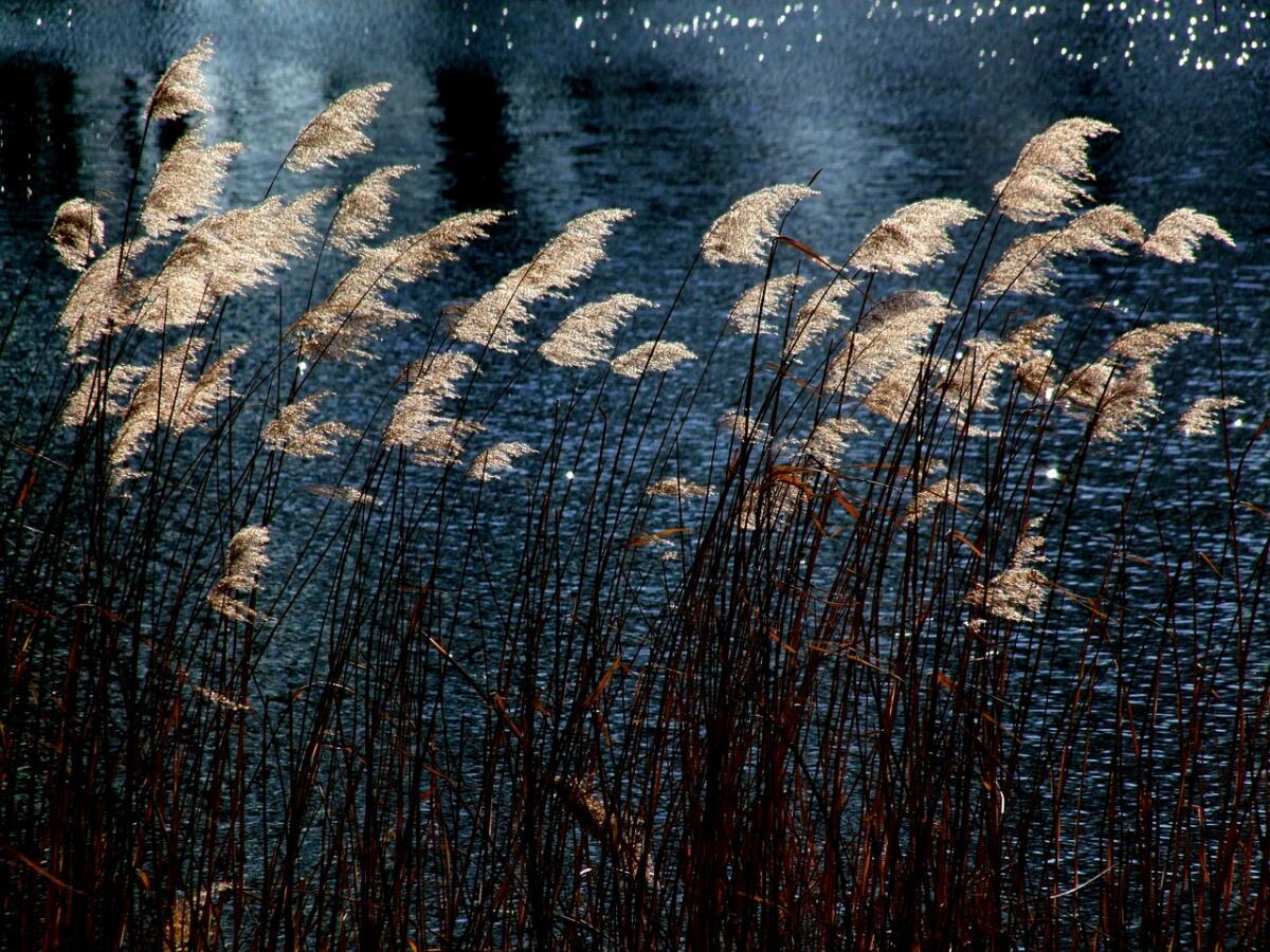 Возможно ли уловить цвет и звук, текущие из жизни? Творчество поэта Эдуарда Балашова