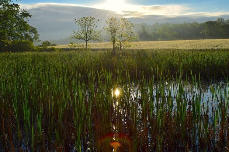 Где отыскать Золотую Ветвь? Леса дремучие и топи болотные