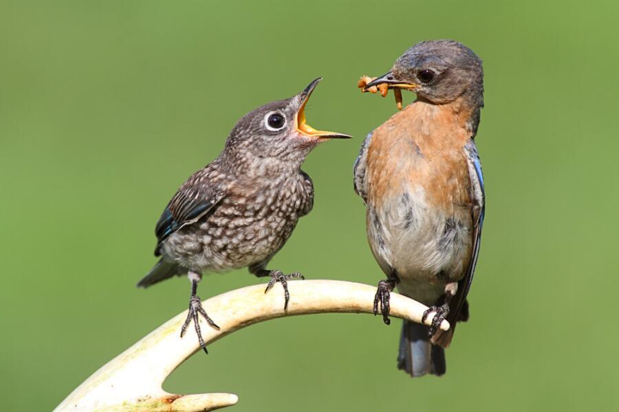 Как защитить урожай от птиц?