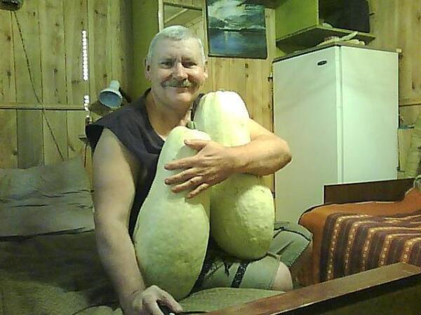 Эти кабачки сорваны с плетей, разросшихся на месте, где рос картофель