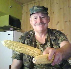 Эта кукуруза выросла совместно с редиской и огурцами
