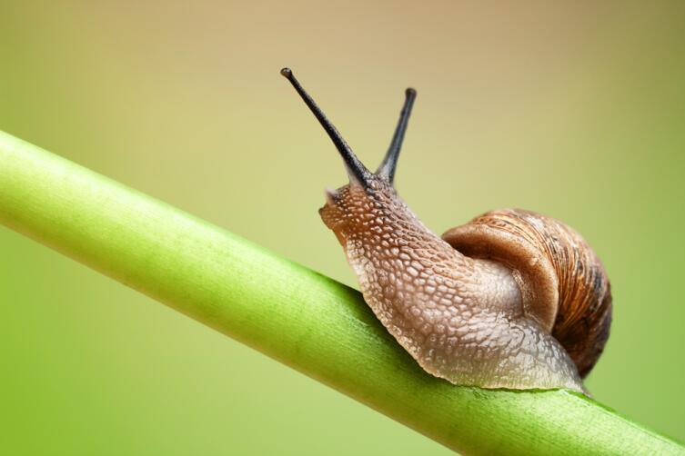Slow Life. К чему приводит замедление темпа жизни?