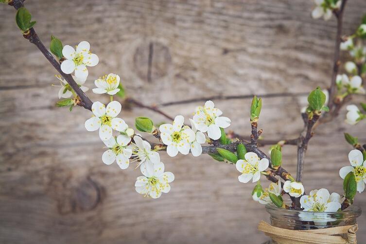 Как продлить жизнь цветам?
