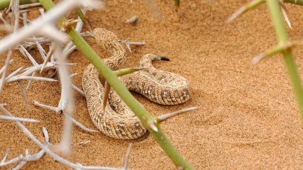 Насколько специфично любят белых в Африке и что можно прочитать в глазах змеи?