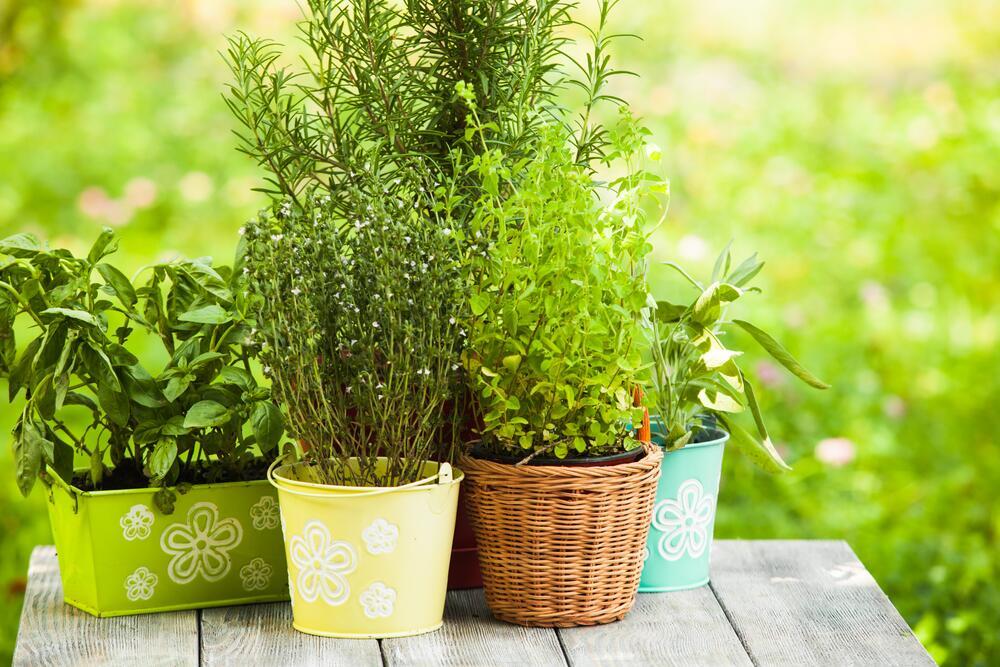 Горшочки с пряными травами