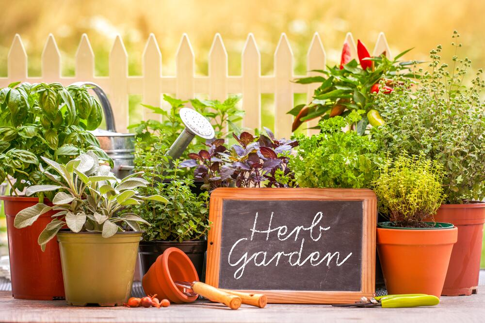 Еслиже места для такого садика в грунте маловато, то есть вариант устроить контейнерный сад пряных трав на террасе