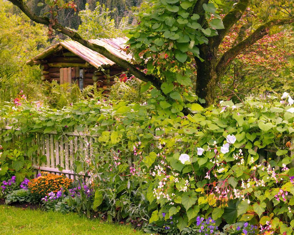 Цвести саду положено с начала весны и до поздней осени