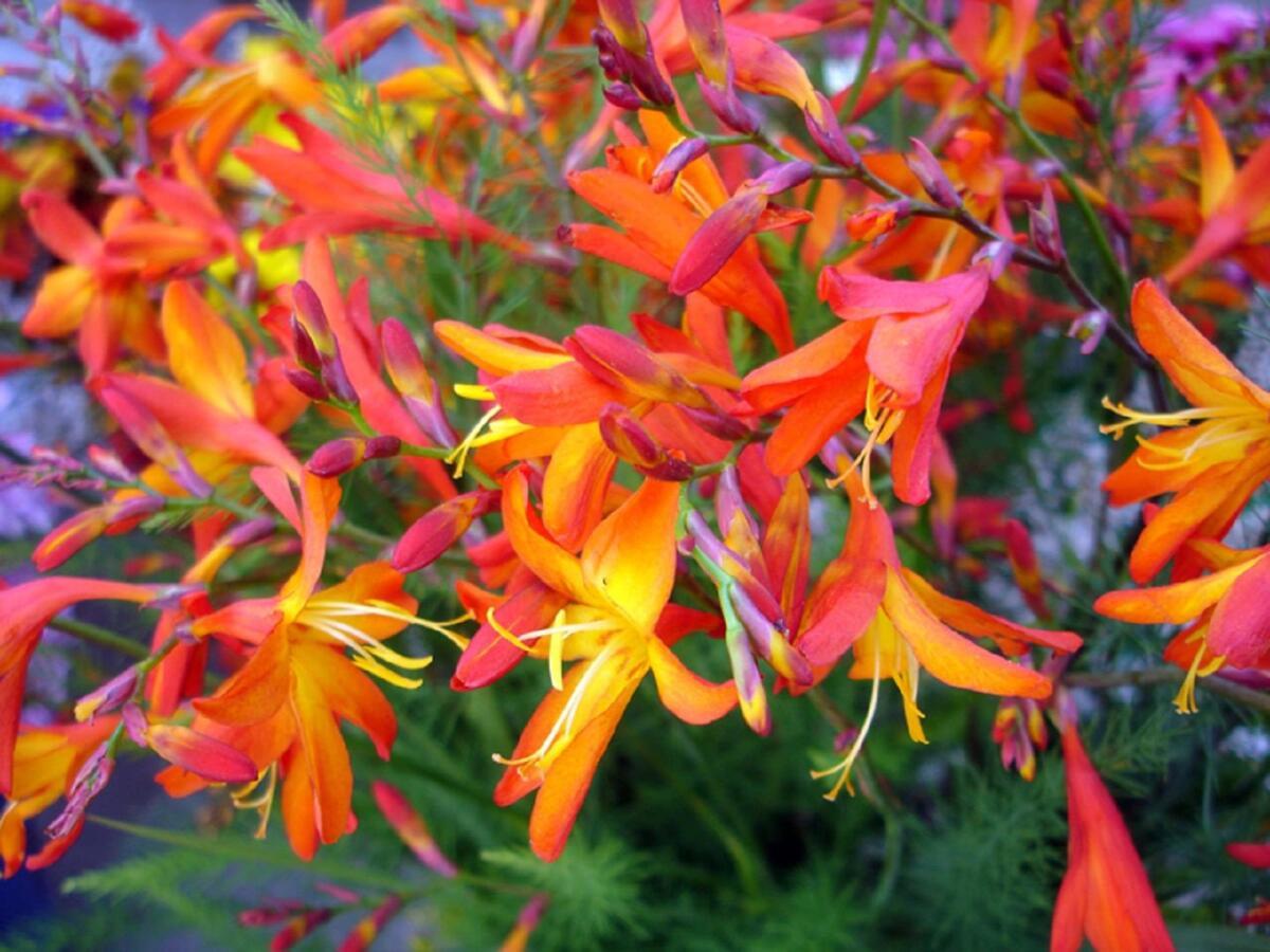 Яркие, теплые оттенки цветов выглядят особенно привлекательно в хмурые осенние дни