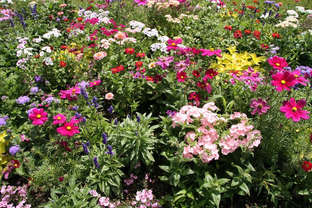 Как организовать на участке цветение с весны до осени?