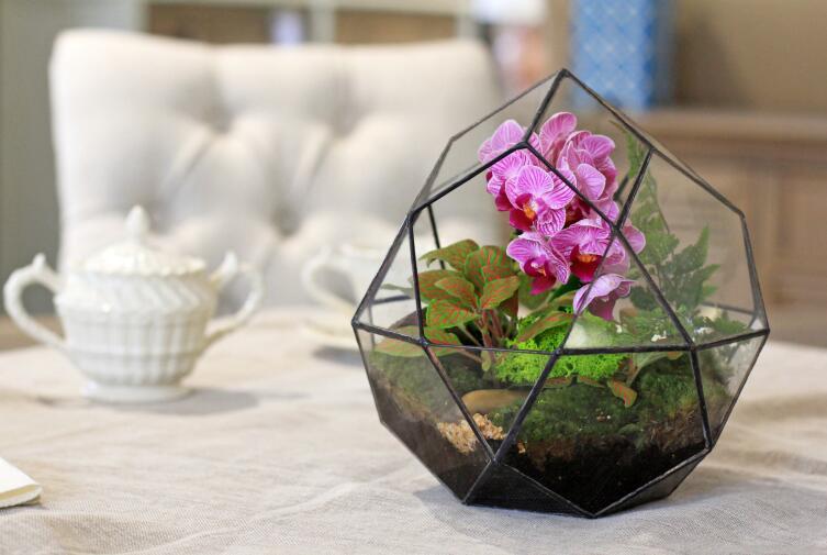 Комнатное цветоводство. Что такое флорариум?