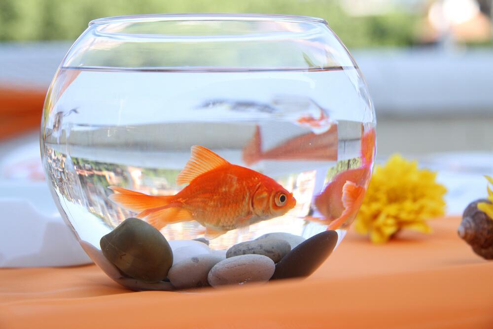 Рыбки для аквариум в домашних условиях 329