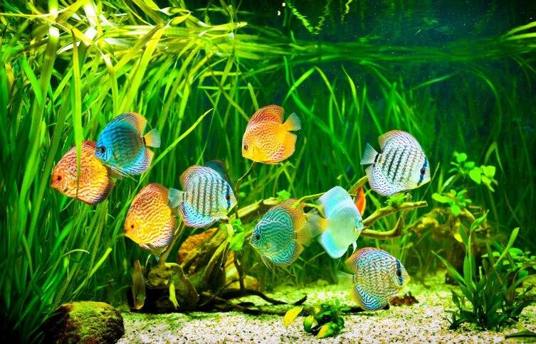 Аквариум в доме. Чем рыбки лучше прочих домашних животных?