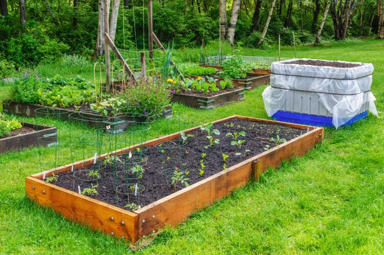 Садите культурные низкорастущие травы и они не позволят сорнякам заполонить участки