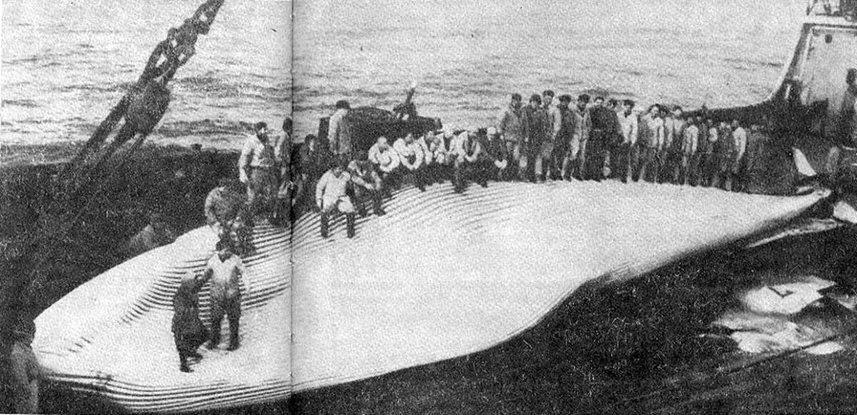Финвал на палубе «Советской Украины»