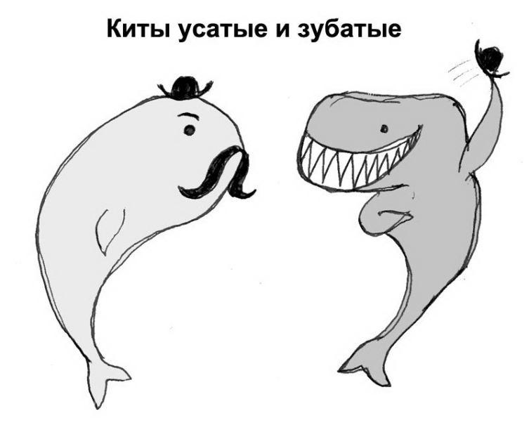 Викторина о китах и дельфинах - 3. Может ли кит проглотить человека?