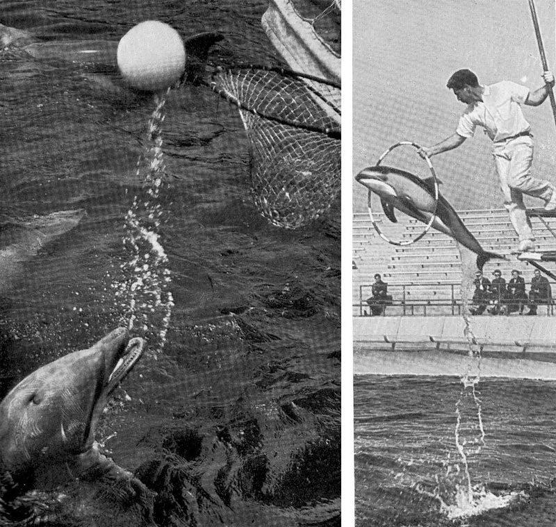 Викторина о китах и дельфинах— 5. А дельфины добрые?