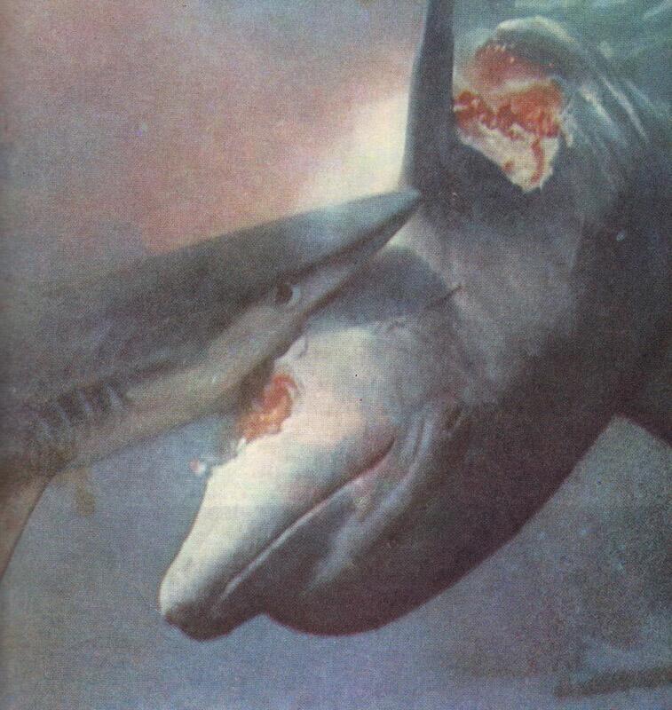 Акула пожирает дельфина