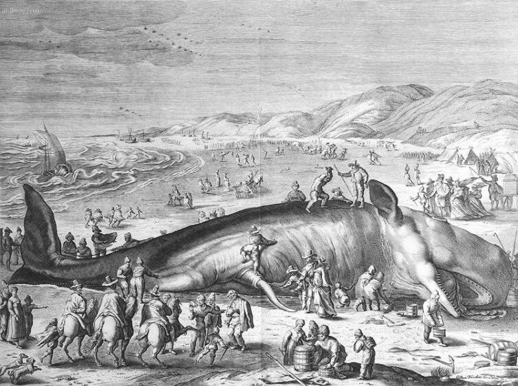 Разделка туши кашалота на рисунке 1598 года