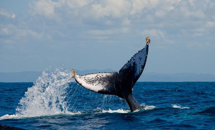 Викторина о китах и дельфинах - 7. Зачем охотились на китов?