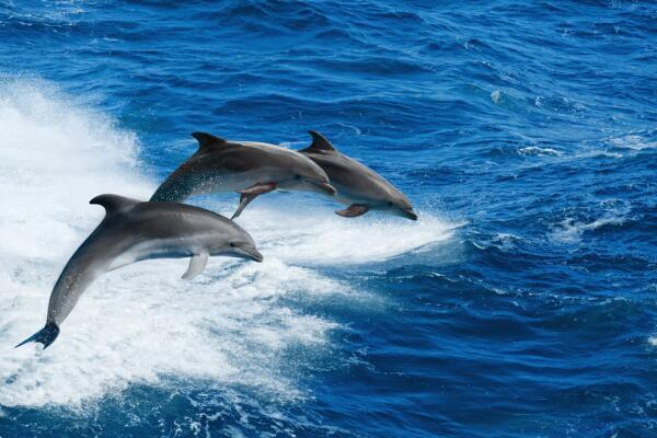 Викторина о китах и дельфинах - 6. А дельфины умные?