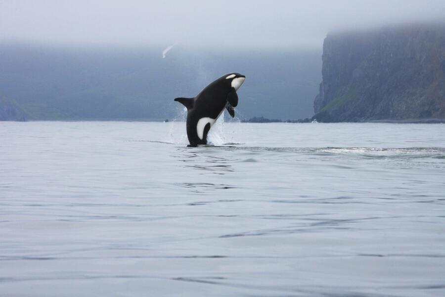 Викторина о китах и дельфинах - 1. Почему кит - не рыба?