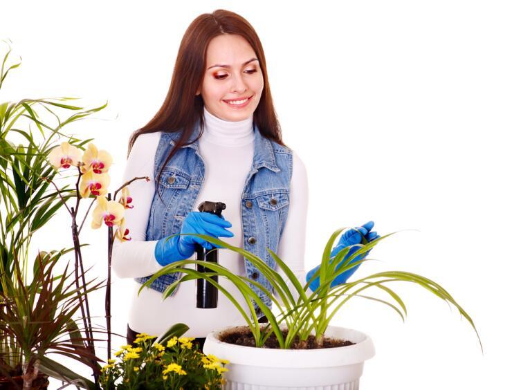 Некоторые растения требуют профессионального ухода