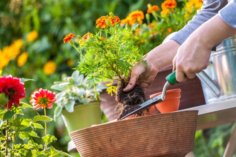 Огородные хлопоты. Как уважить растение?