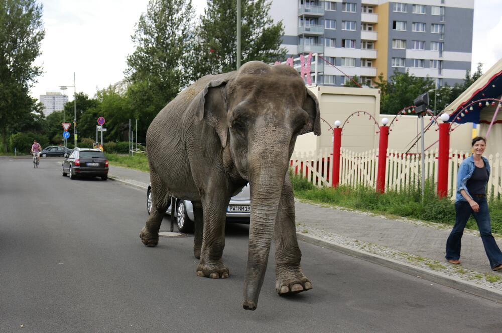 По улице слона водили... По какой?