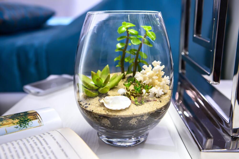 Как правильно озеленить дом? Выбираем комнатные растения
