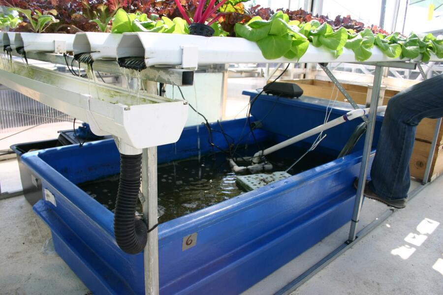 Часть установки для аквапоники. Водный субмодуль с рыбами