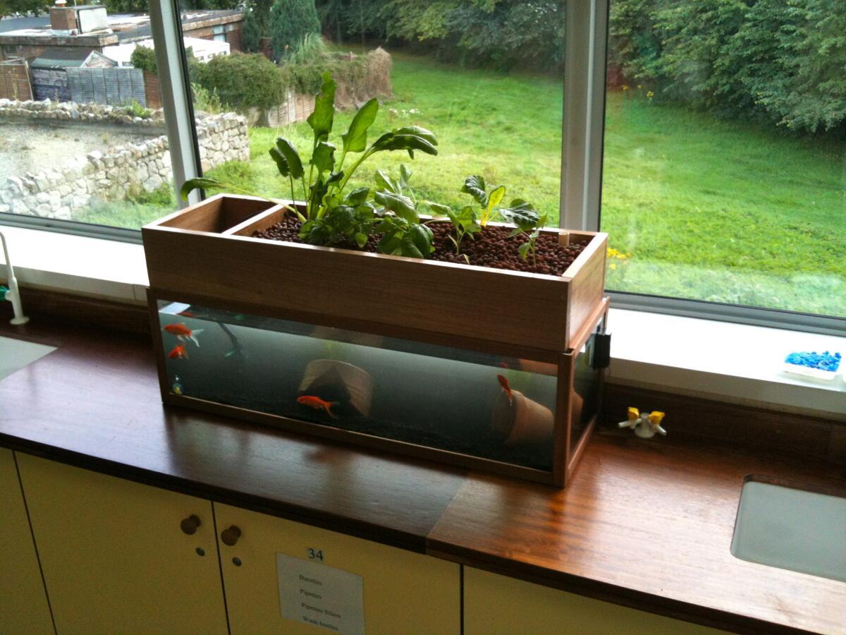 Аквапоника в домашних условиях зелень своими руками схема