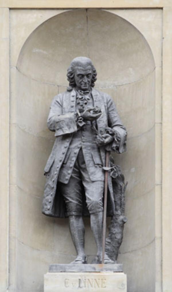 Памятник Линнею на фасаде королевского дворца