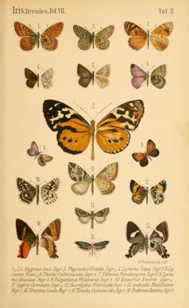 Бабочки из рода Madeleinea