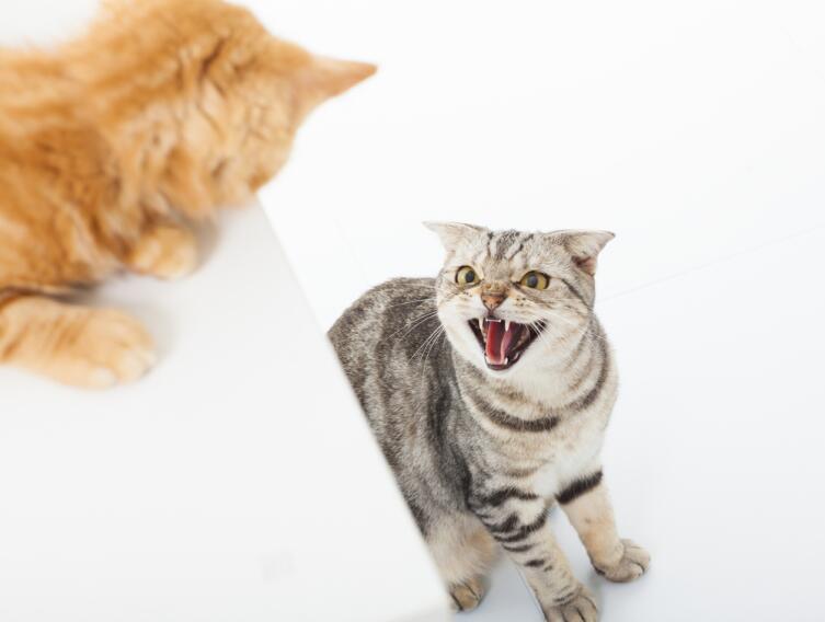 Почему кошка отказывается от лотка?