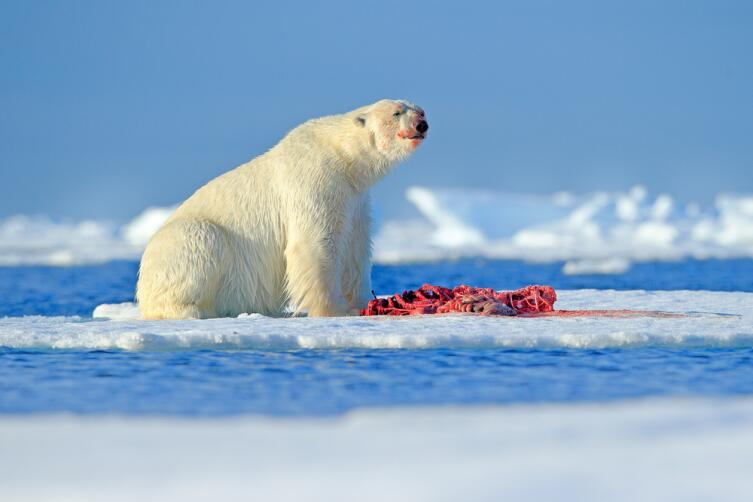 Хитрости выживания животных. Как прожить в Северном Ледовитом океане?