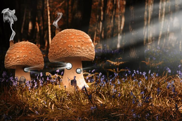 Вариативность мира действительно поистине беспредельна и бездонна, что хорошо иллюстрируется на примере двух грибников