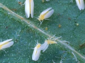 Нематоды в холодильнике, или Как борются с паразитами в Лондоне?