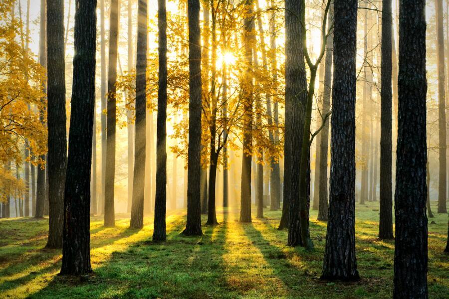 Что нашептал волшебный лес? Обучающая сказка-квест на развитие фонематического слуха