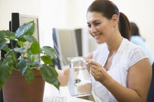 Каковы современные тенденции в озеленении офисов в Москве?