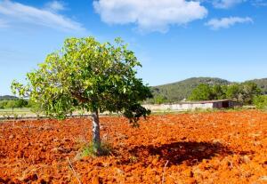 Как оживить тяжелую глинистую почву?