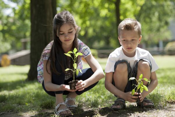 Дачные хлопоты. Как сделать плодородной тяжелую почву?