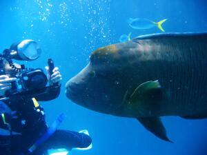Как живет океаническая батипелагиаль?