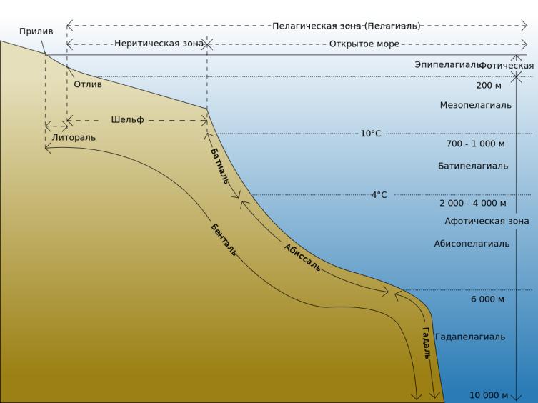 Экологические зоны Мирового океана