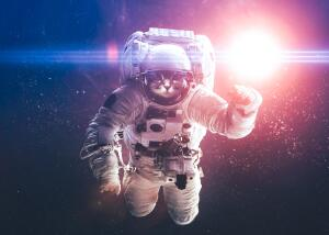 Как собаки и обезьяны прокладывали человечеству путь в космос? Из подворотни на орбиту...